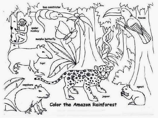 Amazon rainforest animals coloring pages widescreen