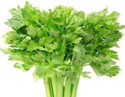 Manfaat daun seledri untuk rambut, manfaat seledri