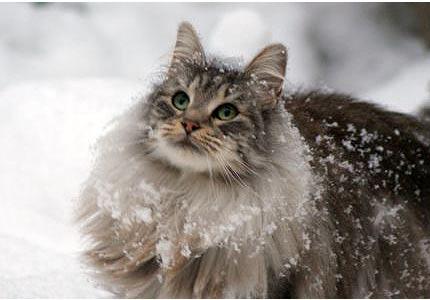 hot spots cat