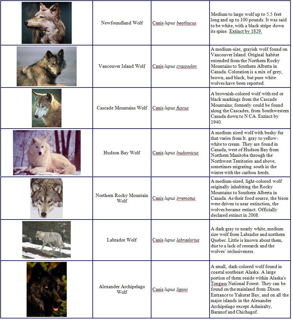 Species and Subspecies Sp002