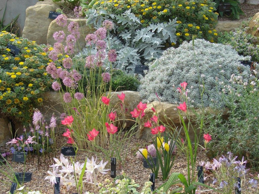 Paisajismo pueblos y jardines jardines de rocalla y rock for Plantas y jardines fotos