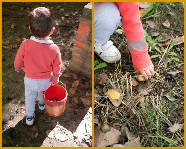 No sin mis hijos recoge nueces en otoño
