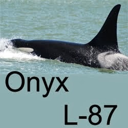Onyx's Story Through My Eyes