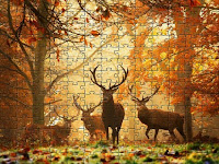 Deers in forest