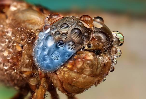 صور حشرات مبللة بالماء