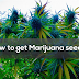 How to get marijuana seeds?