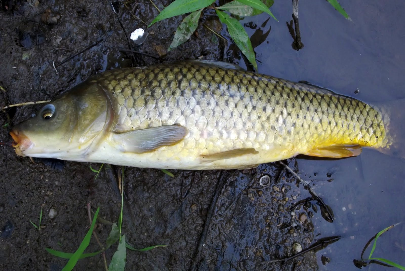 Drifting the prairie ocean outdoor journal bass carp for Outside fish