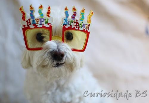 Calculando a idade do seu cão
