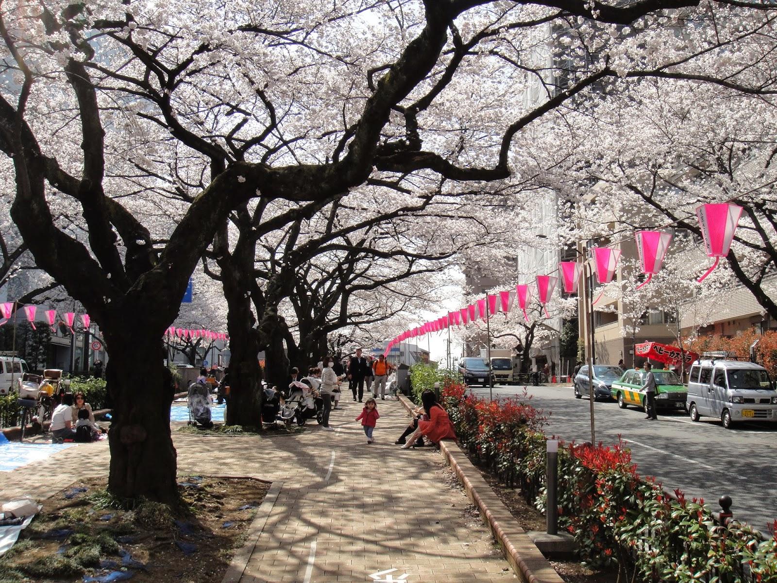 view of sakura park