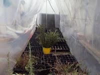 pnvernadero semilleros