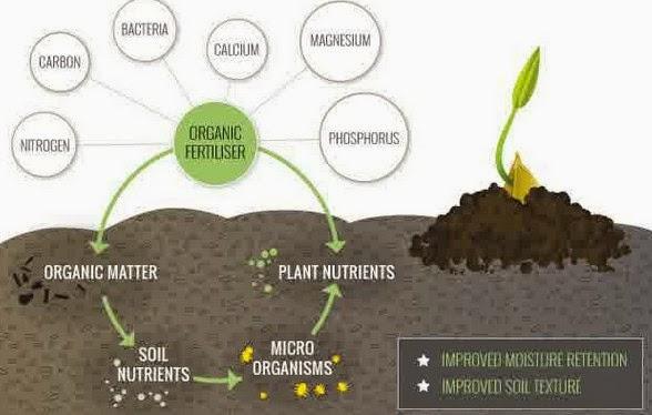 Keajaiban Pupuk Organik bagi Tanaman