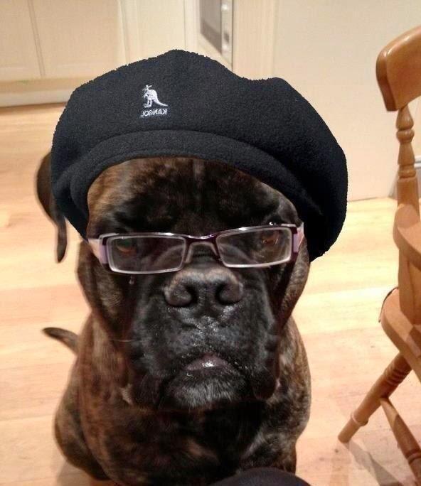 DOG CARE INFORMATION SITE: