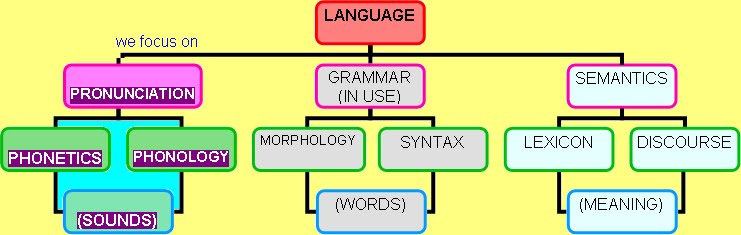 Linguistics is the scientific study of language