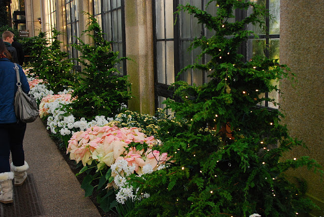 Poinsettia and paper whites with lite evergreen trees along one conservatory wall.