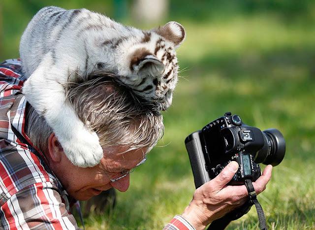 20 fotos mostram que fotografar a animais selvagens pode ser um dos melhores trabalhos do mundo