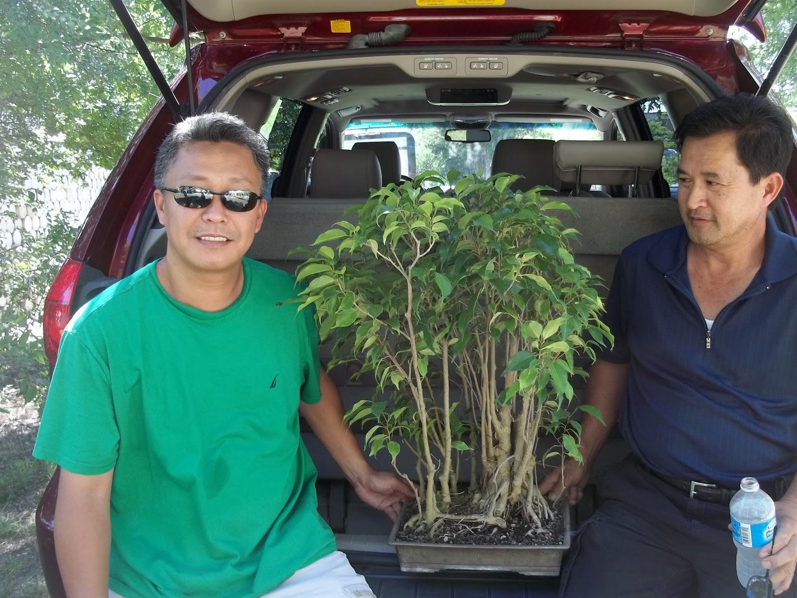 Bent Tree Bonsai July 2013