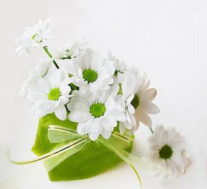 Bong hoa cuc trang.flv - YouTube