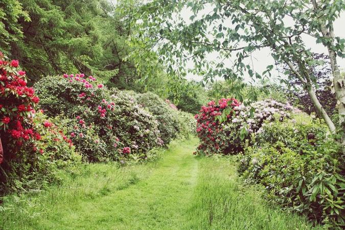 Azaleas en Highwood Gardens