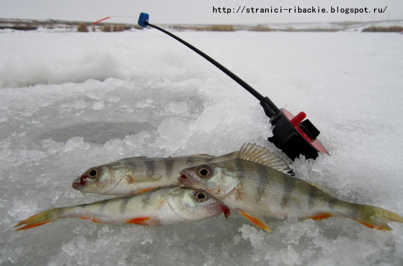прогноз клева рыбы саракташ