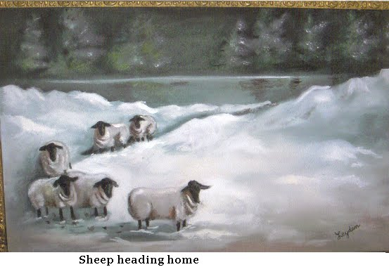sheep heading home #600