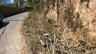 Galhos deixados no acostamento após poda pela AMPLA na Est José Gomes da Costa Jr podem acasionar um acidente