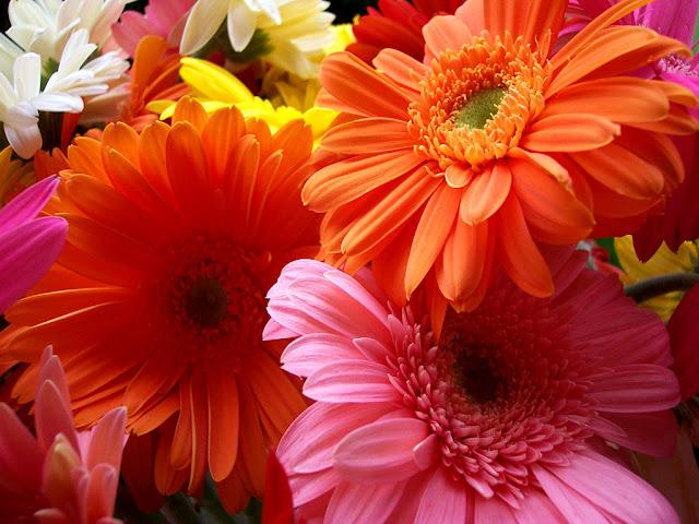 Hình ảnh hoa đẹp 03