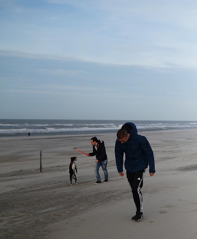 spelen met hond op het strand