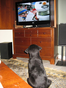 Puppy watching television