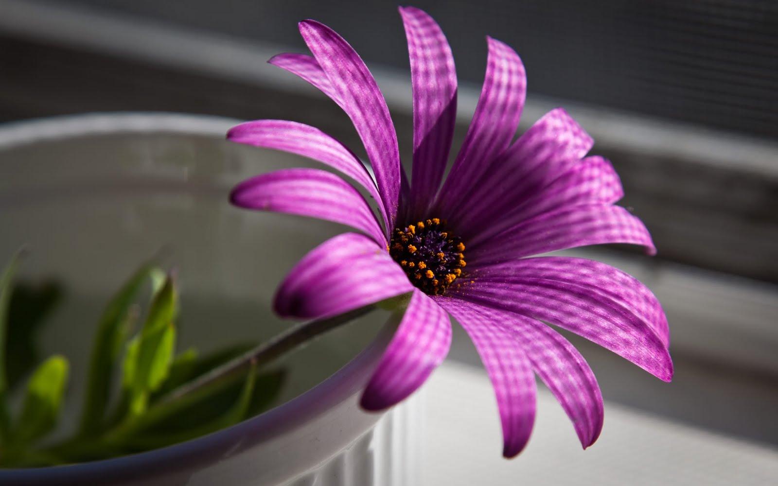Name : Flower Wallpaper Pack 5