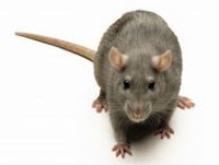 Natural way to repel mice and rats