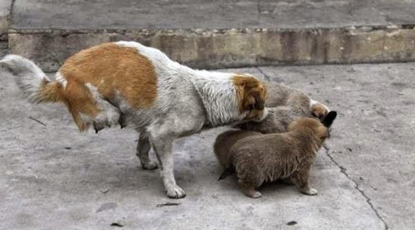 binatang/haiwan kudung