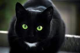 kucing hantu