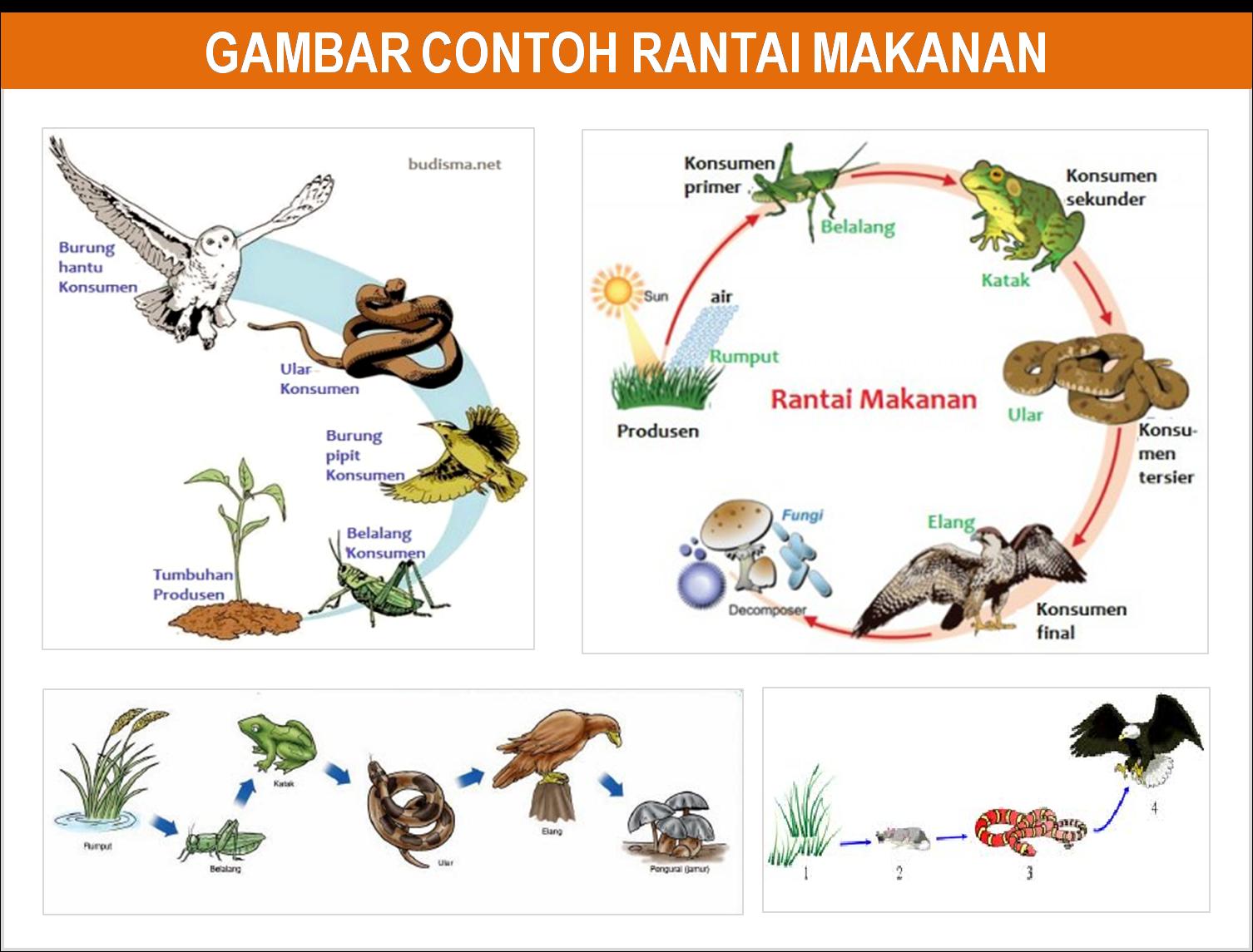 Image Result For Gambar Urutan Katak