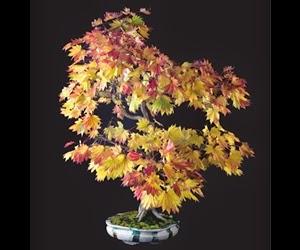 """<img src=""""bonsai21.jpg"""" alt=""""foto bonsai"""">"""