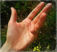 Mano izquierda. Left Hand
