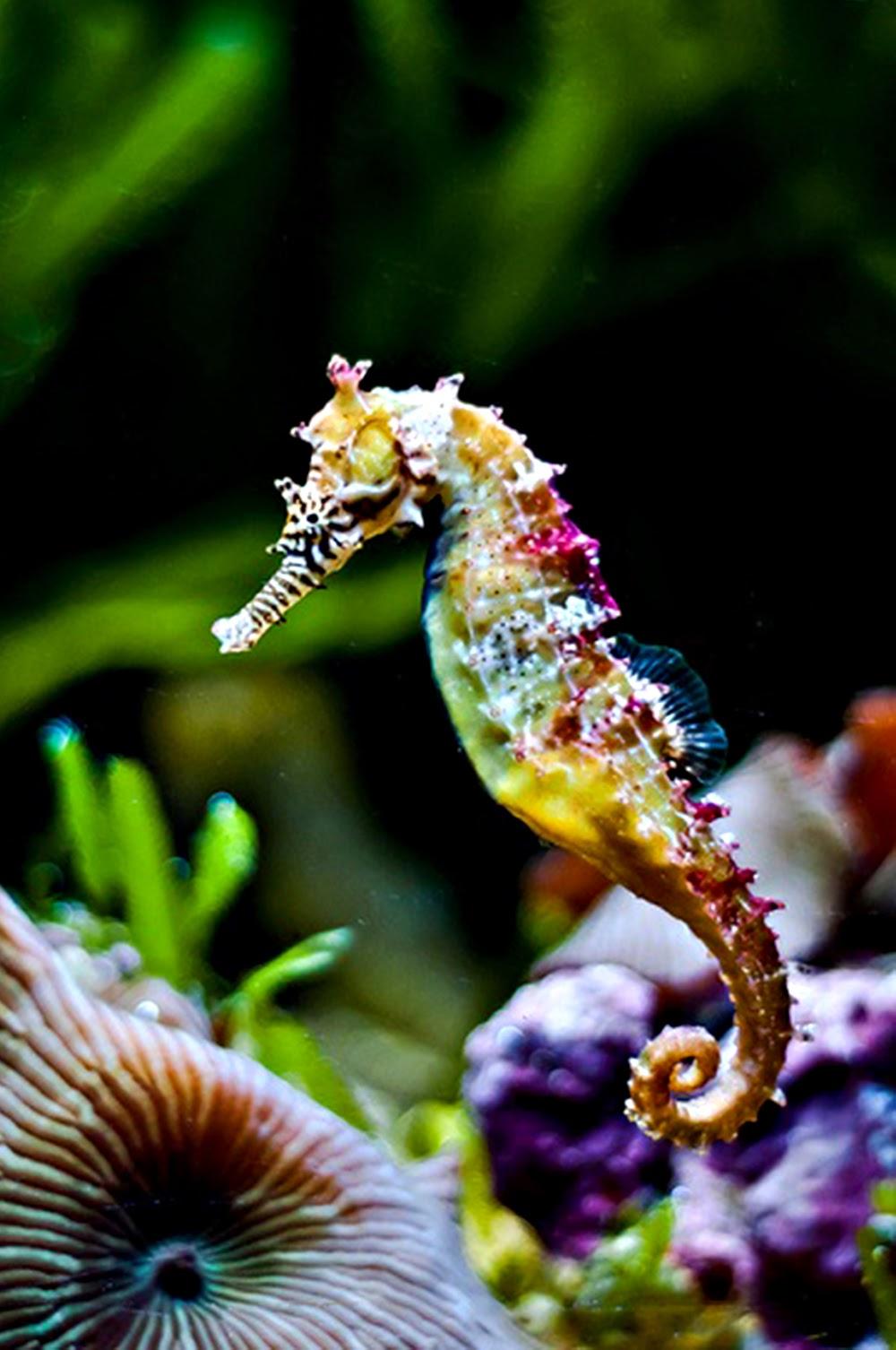 photography seahorse rainbow