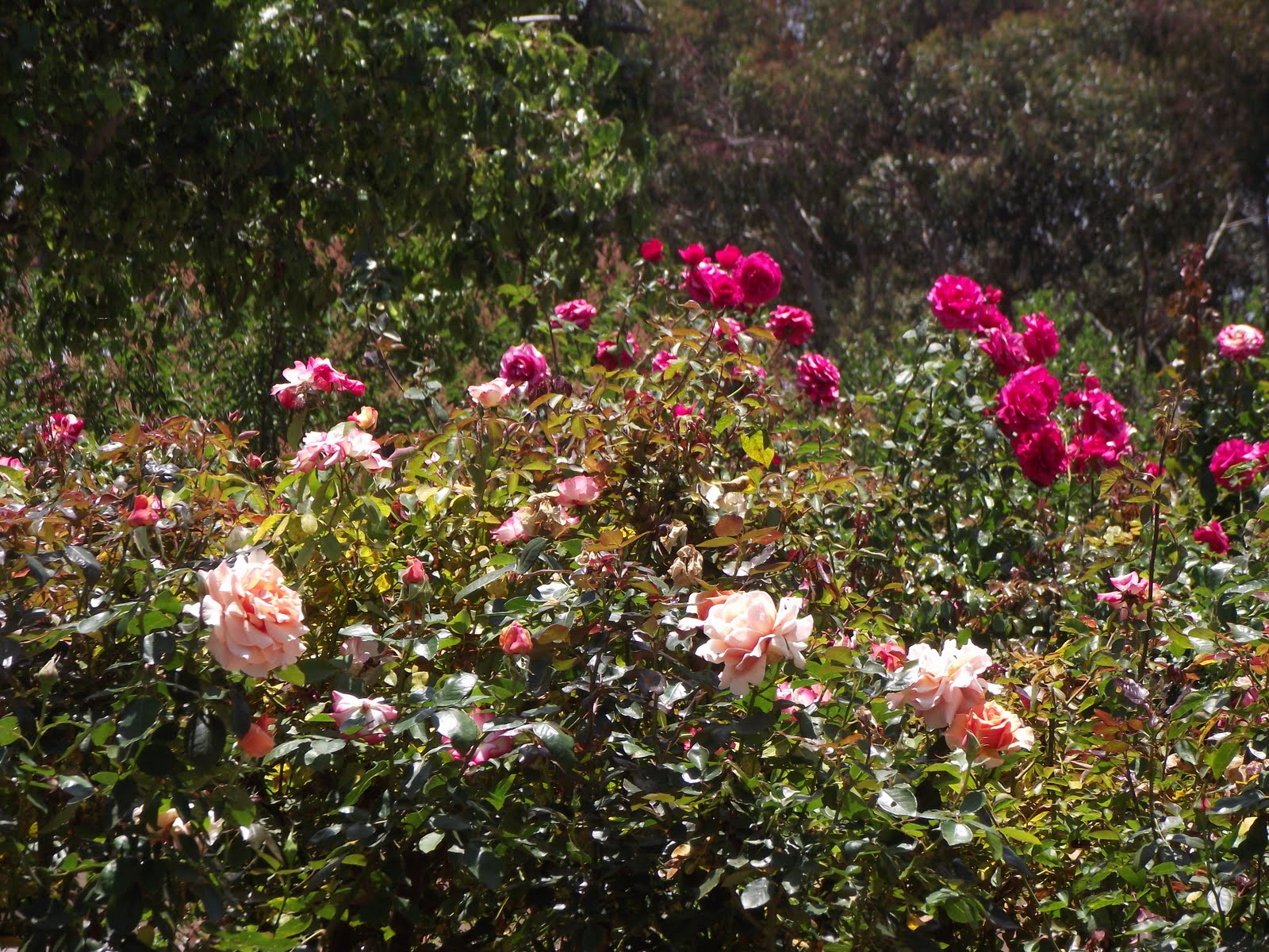 Gorgeous Planet Desert And Rose Gardens Balboa Park