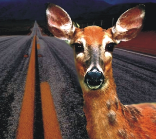 """Deer In The Headlights"" Is Not A Media Strategy"