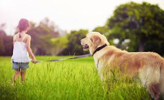 Как дрессировать собаку ? Самостоятельная дрессировка собак. Девочка держит собаку на поводке
