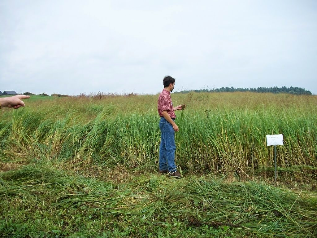 Agronomist Stephen Canner examines switchgrass planting