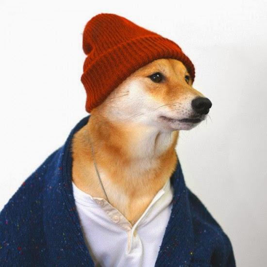 يلبس الكلب لباس شتوي مع أيس كاب