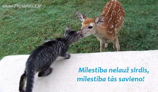 stirniņa skūpstās ar kaķi