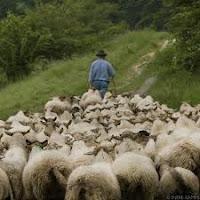 Domba ikuti Gembala