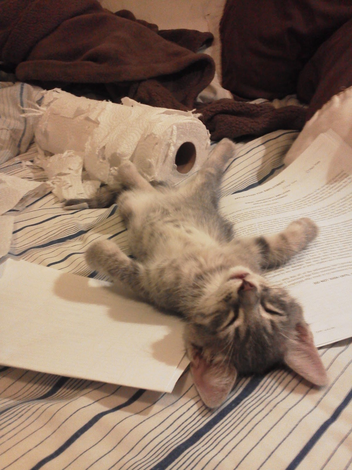 Cute!: Why is this kitten so tired?