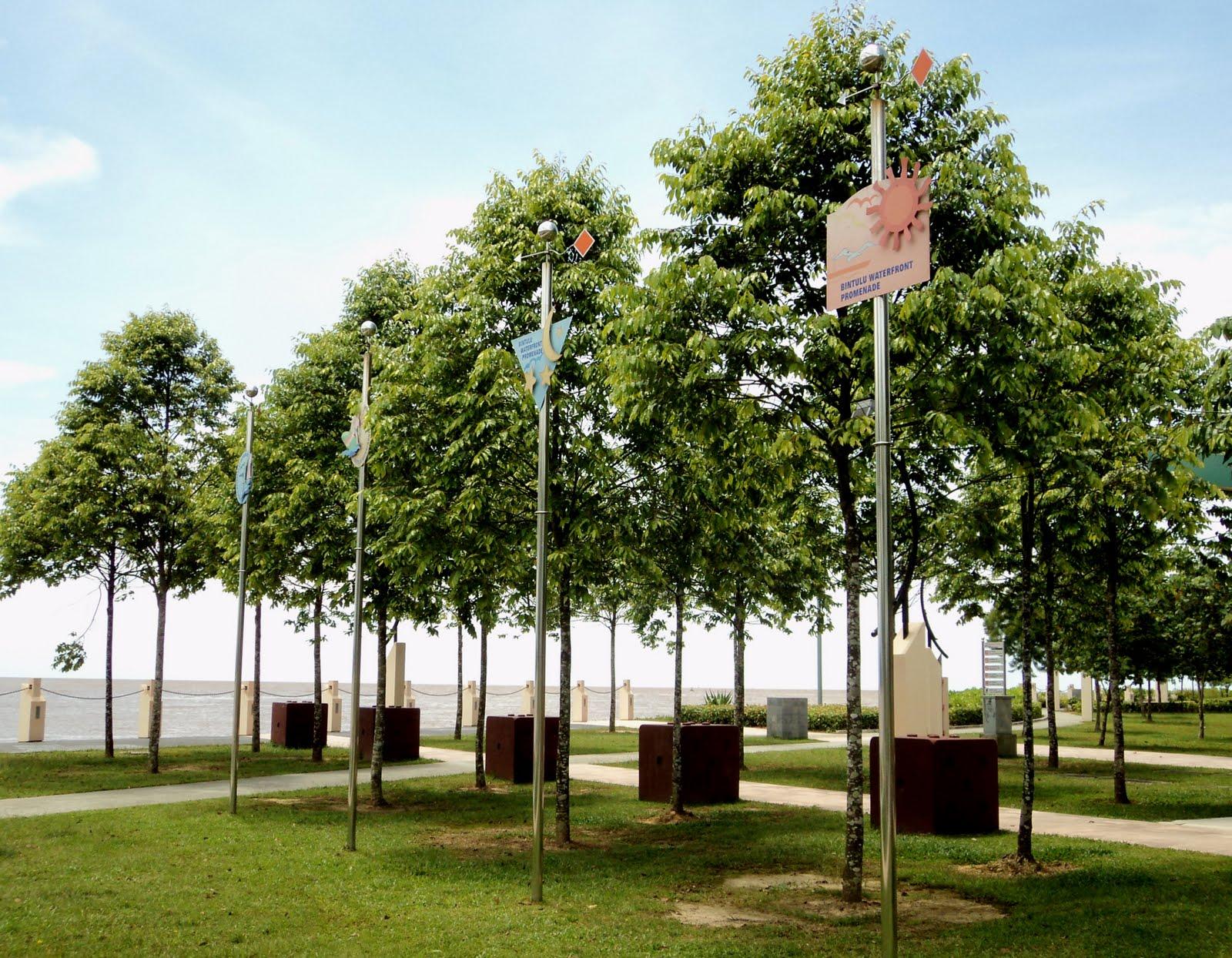 Cây sao đen được trồng tại các khu công viên ven biển