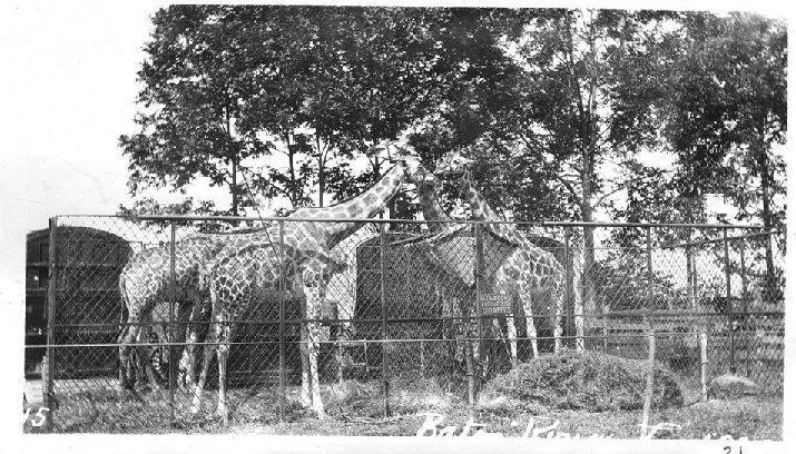 manila zoo background The latest tweets from arnel pineda  manila and san francisco arnelpinedarockscom joined january 2011 1,522 photos and videos photos and videos.