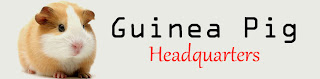 Guinea Pig Headquarters - 