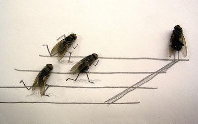 Afinal as moscas sao uteis depois de mortas Image004