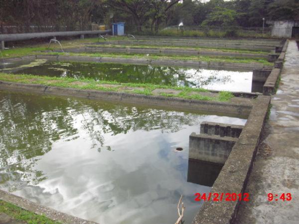 Potencialidades pisc colas municipio jos tadeo monagas for Lagunas para cachamas