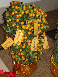 "A Mandarin Orange ""bush."""
